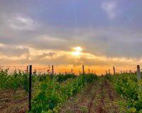 Moschopolis Winery: Ένας συνδυασμός Συστολής & Φιλοδοξίας, Βαθιάς Γνώσης & Εμπειρίας