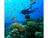 10 Τop Προορισμοί για Scuba Diving στην Ελλάδα